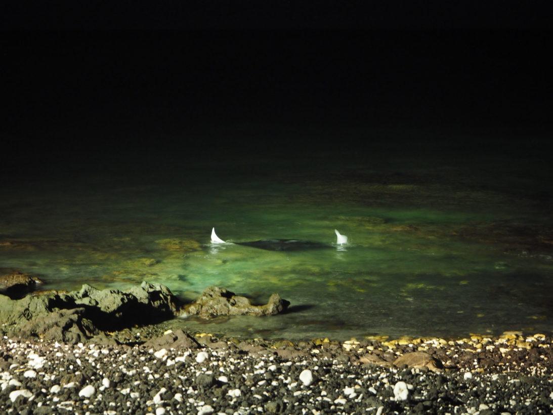 Mantarochen am Hotelstrand auf Big Island