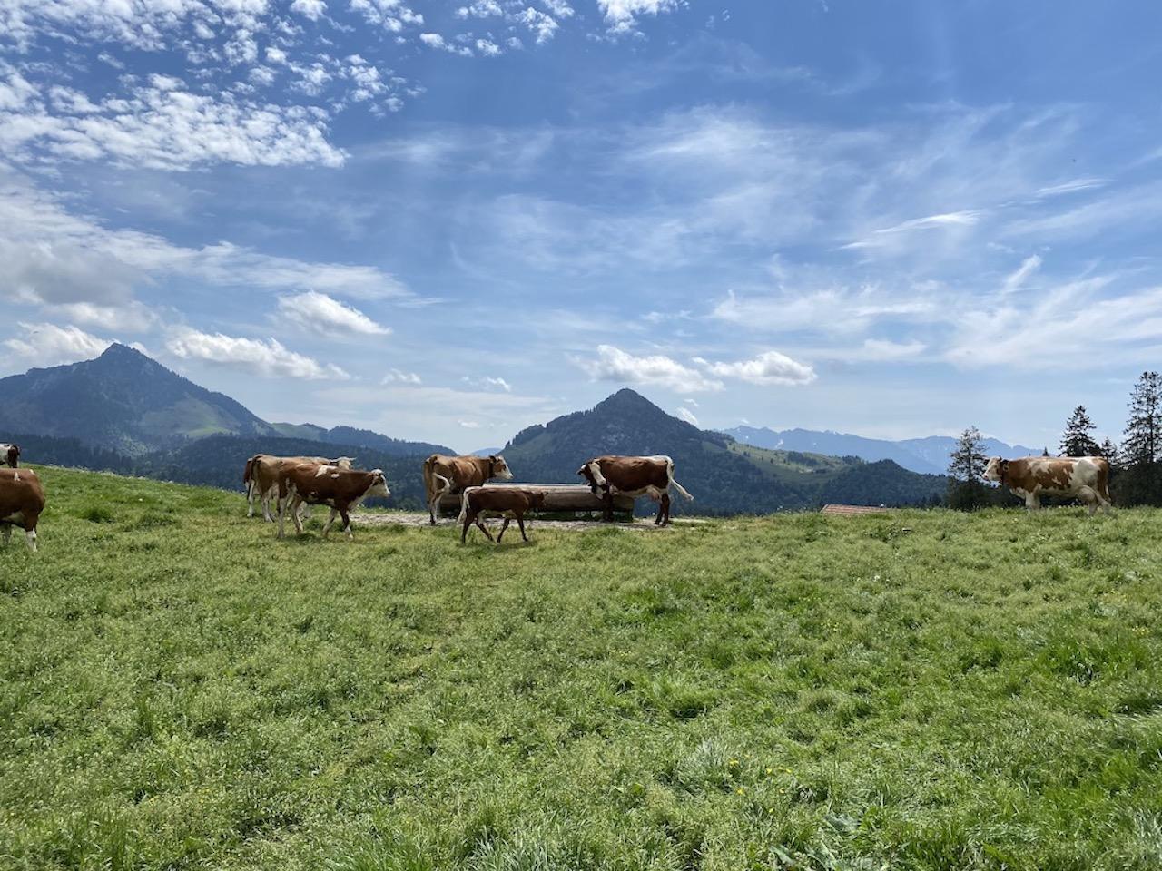 Heuberg Plateau